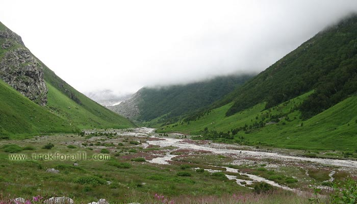 Valley of Flowers in July, Pushpawati River bed, the pink shed is Epilobium Latifolium flower.
