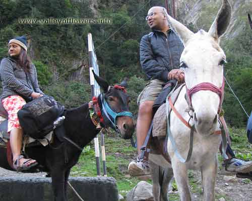 Govindghat to Ghangaria by Pony