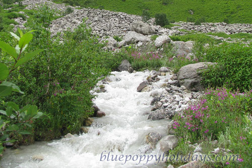 Pushpawati river bed in Valley of Flowers, 7 Kms away from Ghangaria