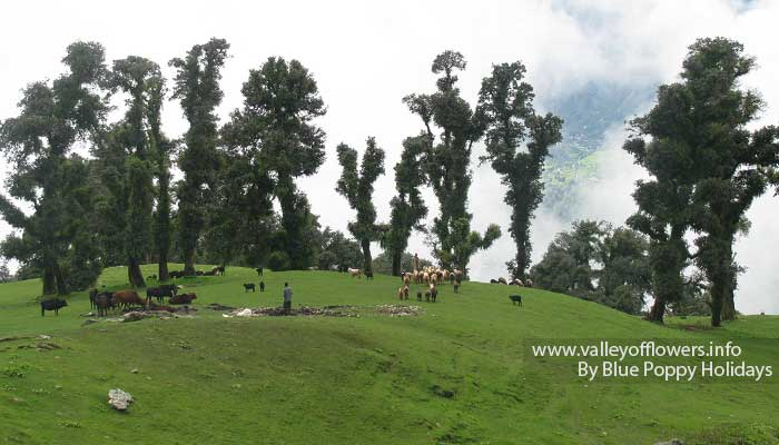 A beautiful Bugyal (Alpine meadows) on our trek to Tungnath Temple. We can also camp here.