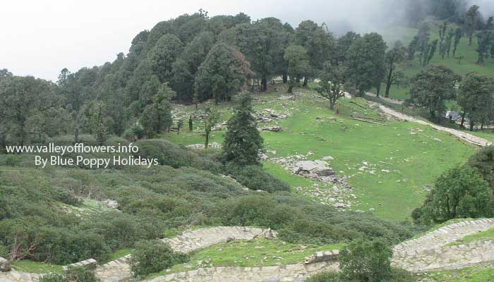 The trek between Chopta and Tungnath Temple.