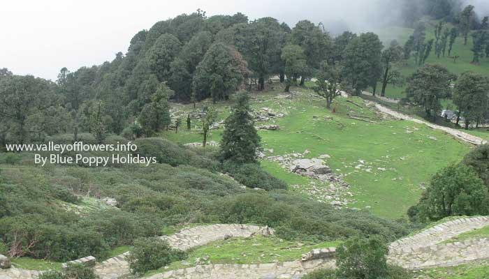 The trek between Chopta and Tungnath Temple.