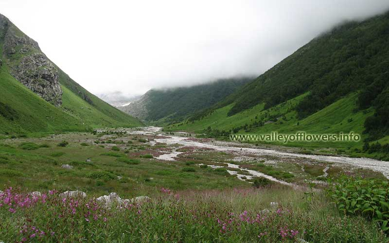 A beautiful scene of Pushpawati River bed. The pink shade is Epilobium Latifolium. This flower is used as antidote to poison.