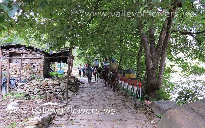 Pilgrims using ponies between Govindghat to Ghangraria.