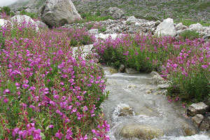 valley-of-flowers-12