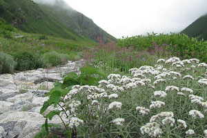 Hotel booking for valley of flowers