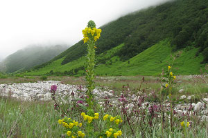 Best time to visit Valley of Flowers
