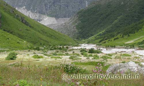 Valley of Flowers as seen in August, this is Pushpawati River Bed