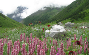 Valley of Flowers Information(Part-I)