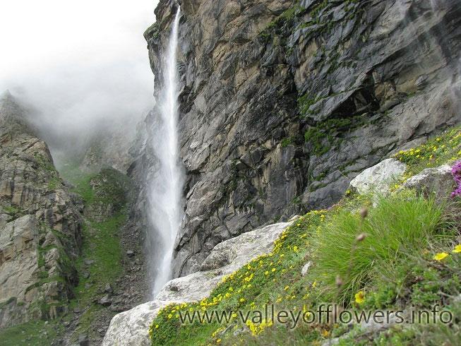 Vasudhara Falls, You can see flowers
