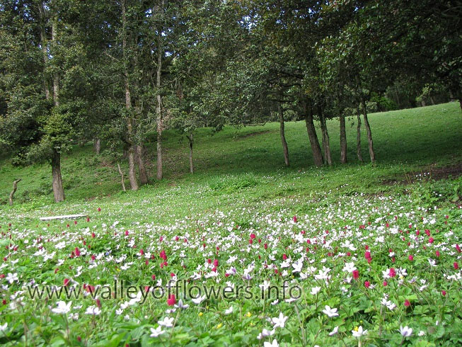 Flowers bed near Auli
