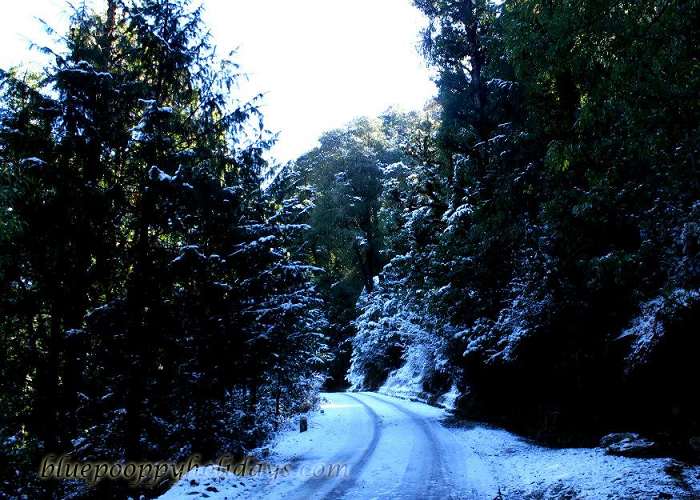 Way to Auli in winter