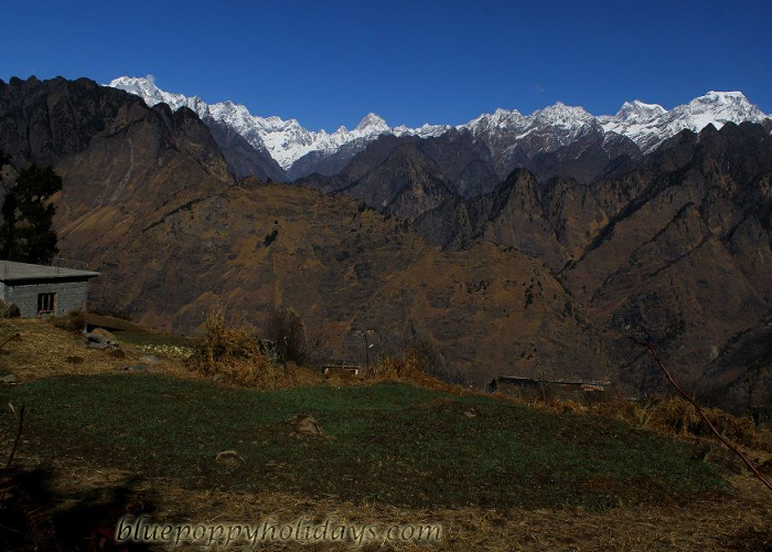 Auli in Spring