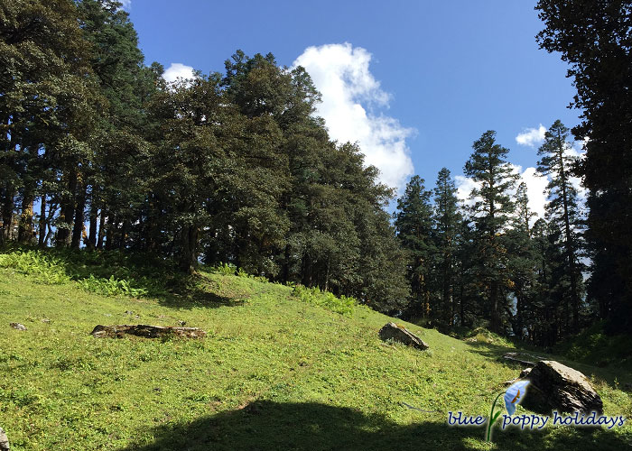 Dense forest near Tali lake
