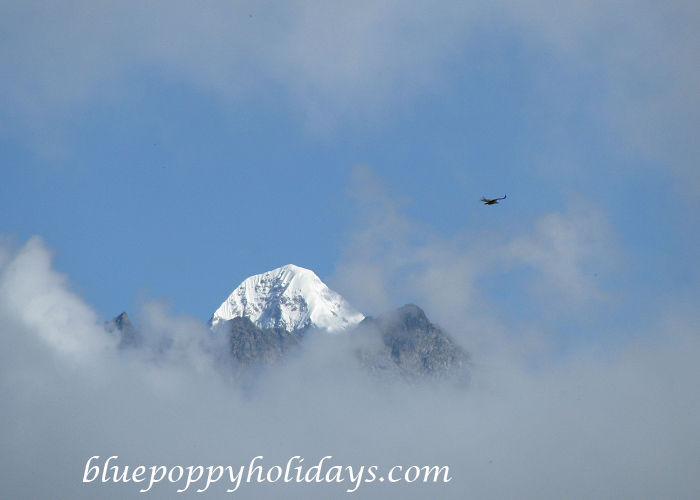 Gauri Peak From Auli