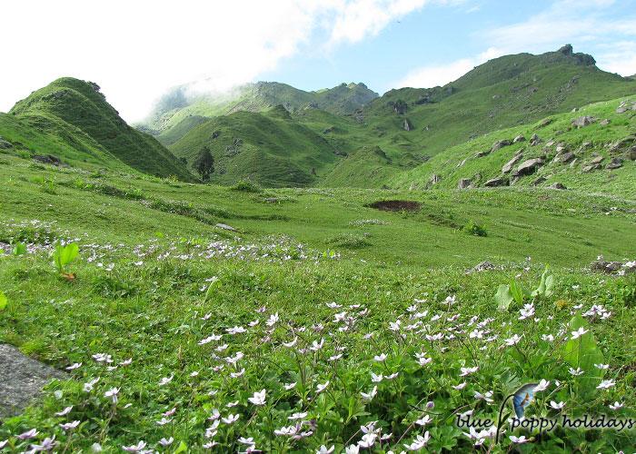 Gorson Peak meadows