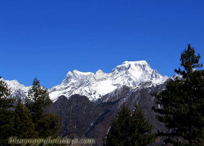 Nanda Devi Peak from Auli