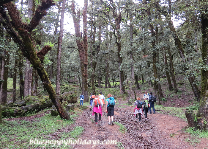Our group crossing a forest on the way From Auli to Gorsan
