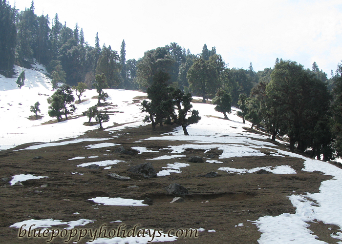 Snow in Chopta