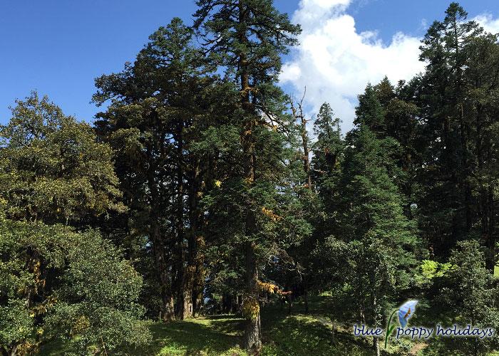 Trek through dense forest
