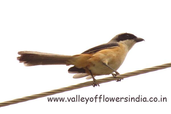 Unknown Bird near Govindghat