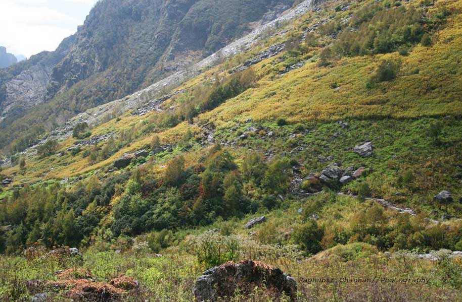 trek can be seen from The vegetation, this is new trek to valley of flowers.