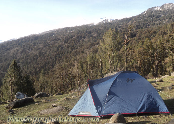 Camps at Tapovan