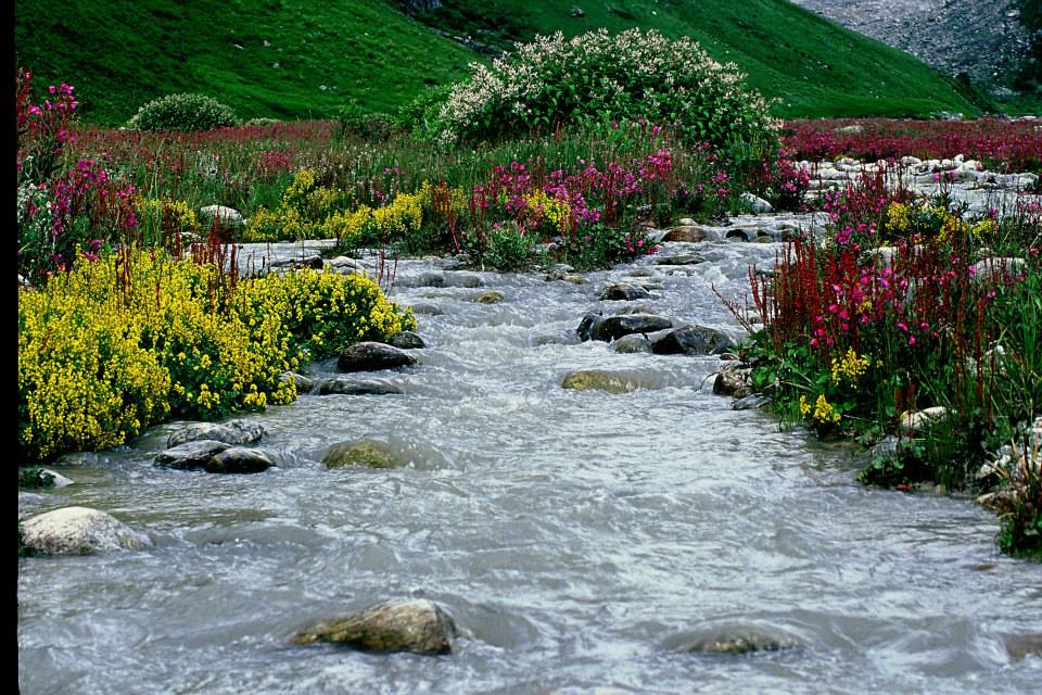 Valley of Flowers (2)