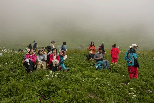 Japanese in the middle of Valley of Flowers