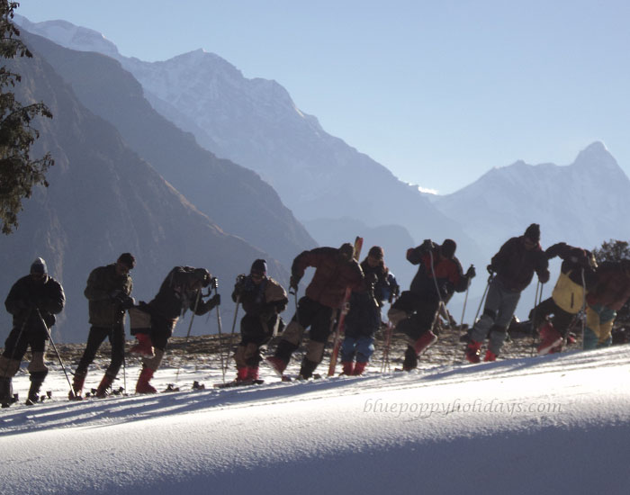 Picture of Skiing at Auli