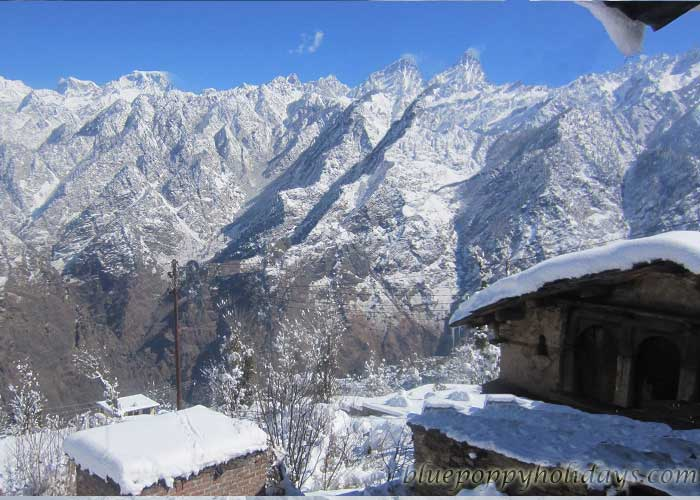 Snow Capped mountains at Auli