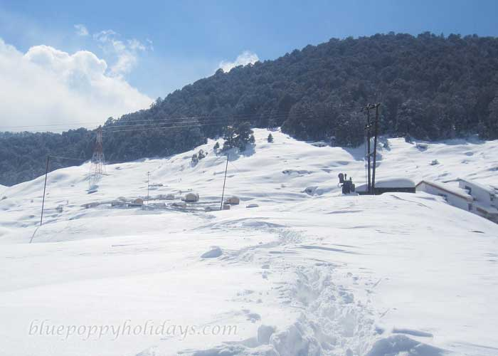 Well Dressed Snow Slopes in Auli