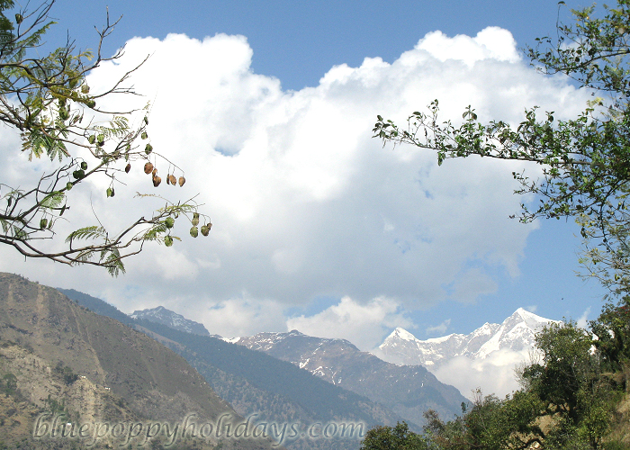 Himalyan Peaks from Chopta